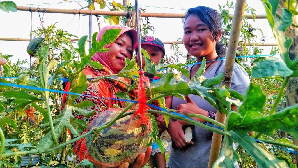 Heboh Musim Kemarau Muncul Agrowisata Semangka Kendeng Di Tegaldowo Rembang Kapernews